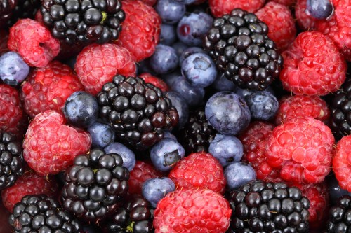 forest_fruit_186059